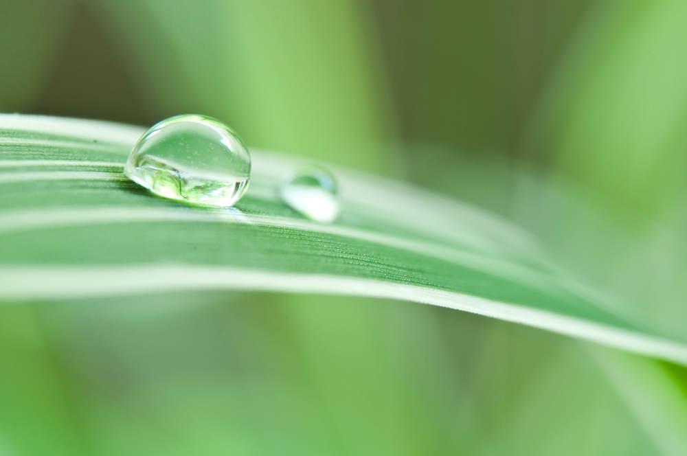 Nachhaltige Möbel - unser wichtigstes Anliegen: Naturmöbel Hartmann